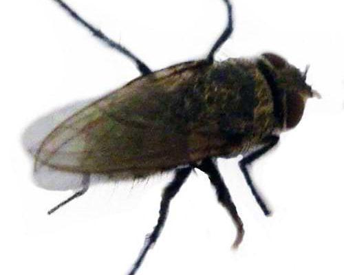 مكافحة الذباب والبق